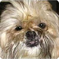 Adopt A Pet :: Tommy - Mays Landing, NJ