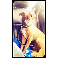 Adopt A Pet :: Monty - Grafton, OH