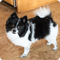 Adopt A Pet :: PANDA - Hurricane, UT