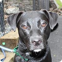 Adopt A Pet :: Marlie - Salem, MA