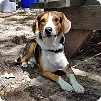 Adopt A Pet :: Stewart - Charelston, SC