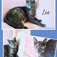 Adopt A Pet :: Zoe Female - Knoxville, TN