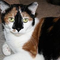 Adopt A Pet :: Delilah - Jenkintown, PA