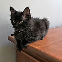 Adopt A Pet :: Cargo - Vancouver, BC