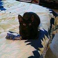 Adopt A Pet :: Buntie - Minneapolis, MN
