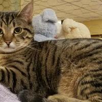 Adopt A Pet :: Max - Marshfield, WI