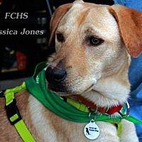 Adopt A Pet :: Chester - Youngsville, NC