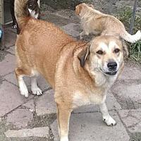 Labrador Retriever Mix Dog for adoption in Pembroke, Georgia - Pumpkin