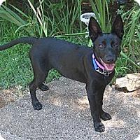 Adopt A Pet :: Jetta- Nor Cal - Jamestown, CA