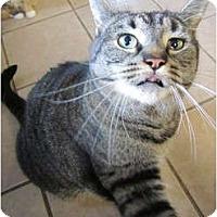 Adopt A Pet :: Tigger Too - Pascoag, RI