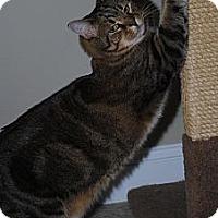 Adopt A Pet :: Boots - Monroe, NC