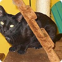 Adopt A Pet :: Ivy Morgan - Mobile, AL