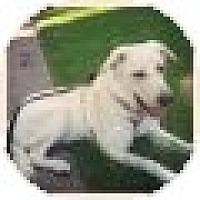 Adopt A Pet :: Jen/Kora - Denver, CO