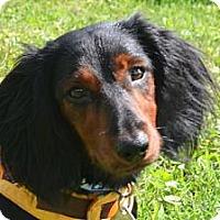 Adopt A Pet :: Elvis - Bryan, TX