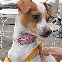 Adopt A Pet :: DAISY - ADOPTED - RENO, NV