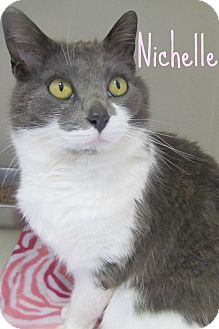 Domestic Shorthair Cat for adoption in Menomonie, Wisconsin - Nichelle