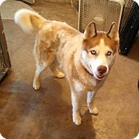 Adopt A Pet :: Zeus - Geneseo, IL