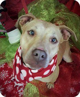 Terrier (Unknown Type, Medium) Mix Dog for adoption in Flint, Michigan - Betty Davis