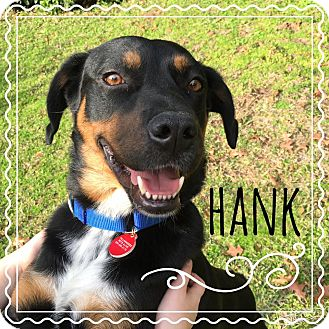 Rottweiler/Retriever (Unknown Type) Mix Dog for adoption in Tallahassee, Florida - Hank