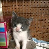 Adopt A Pet :: Jack - San Jose, CA