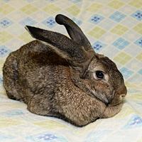 Adopt A Pet :: Ziggy - Chesterfield, MO