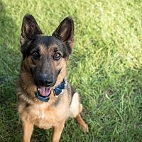 Adopt A Pet :: Boss - Fort Valley, GA