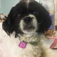 Adopt A Pet :: Spark Plug - Greenville, PA