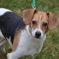Adopt A Pet :: South - Fairfield, OH