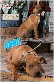 Rhodesian Ridgeback/Labrador Retriever Mix Dog for adoption in Edmonton, Alberta - Anna