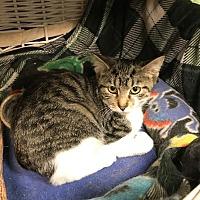 Adopt A Pet :: Footloose - Byron Center, MI