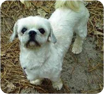 Shih Tzu/Lhasa Apso Mix Dog for adoption in Duluth, Georgia - Doodlez