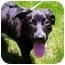 Photo 1 - Labrador Retriever/Retriever (Unknown Type) Mix Dog for adoption in Salem, New Hampshire - Wolf-Etta