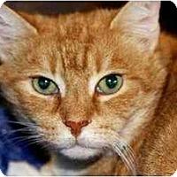 Adopt A Pet :: Pool Kitty - Woodstock, GA