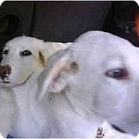 Adopt A Pet :: FLEURY - Wayne, NJ