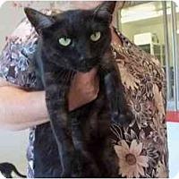 Adopt A Pet :: Lila - El Cajon, CA
