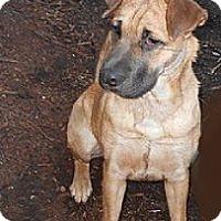 Adopt A Pet :: Hercules - ....., FL