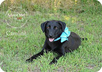 Labrador Retriever Mix Dog for adoption in Bolivar, Tennessee - Caroline