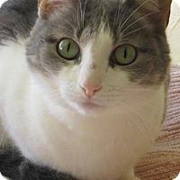 Adopt A Pet :: Mindy - Prescott, AZ