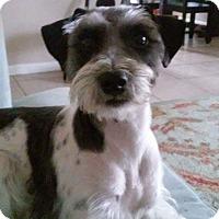 Adopt A Pet :: Polly - Kingwood, TX