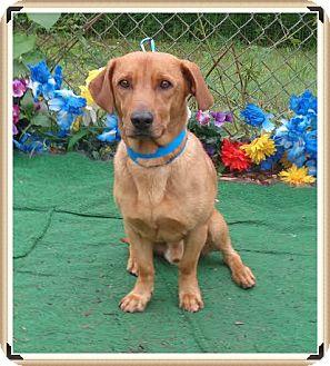 Dachshund Mix Dog for adoption in Marietta, Georgia - REX (R)