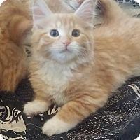 Adopt A Pet :: Comet - Edmonton, AB