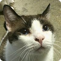 Adopt A Pet :: Sinatra - Winchester, CA