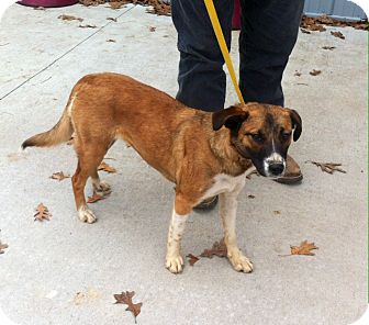 Feist Mix Dog for adoption in Princeton, Kentucky - January