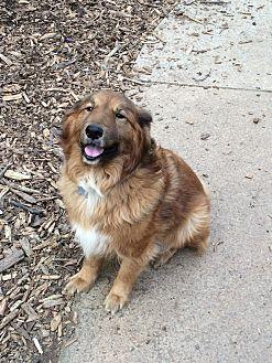 Golden Retriever/Collie Mix Dog for adoption in Acworth, Georgia - Tuddy