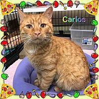 Adopt A Pet :: Carlos - Atco, NJ