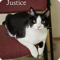 Adopt A Pet :: Justice - Shelton, WA