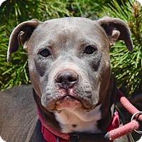 Adopt A Pet :: Brandy - Payson, AZ