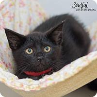 Adopt A Pet :: Ramone - Oakland, CA