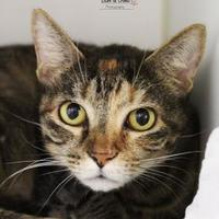 Adopt A Pet :: Eva Marie - Wilkes Barre, PA