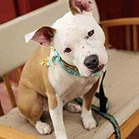 Adopt A Pet :: Allie - Rochester, NY